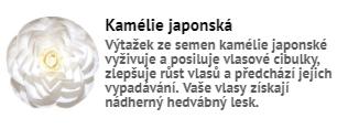 kamelie_japonska